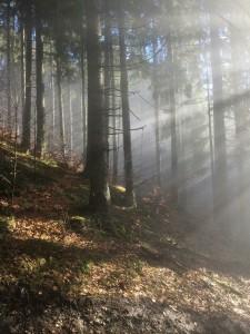 forêt M.Agnès